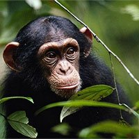 Những động vật cách ly đồng loại mắc bệnh truyền nhiễm