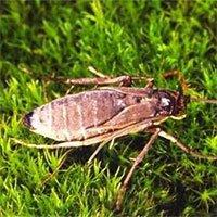 Những hòn đảo kỳ lạ có côn trùng không biết bay