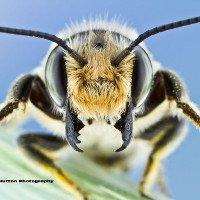 Những khuôn mặt côn trùng làm kinh ngạc của Colin Hutton