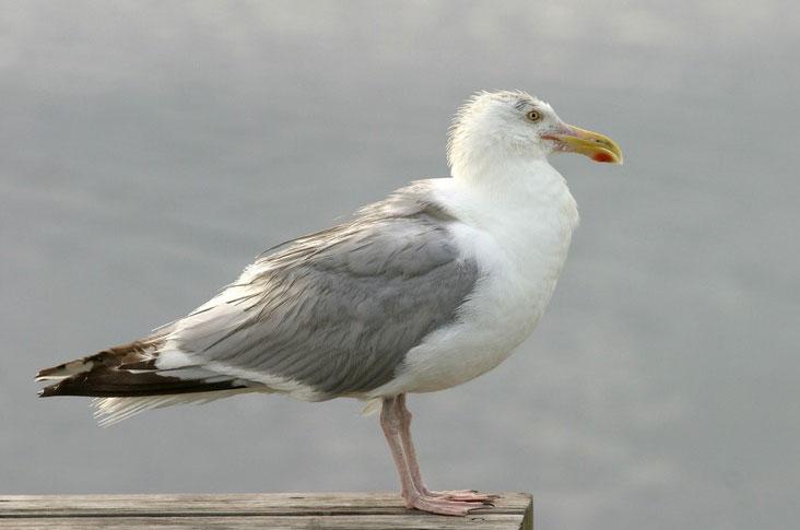 Những kỷ lục kỳ lạ về các loài chim