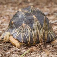 Những loài rùa lạ nhất thế giới
