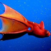 Những loài sinh vật kỳ quái ẩn náu dưới biển sâu