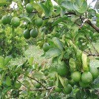 Những loại trái cây không hạt thu lời
