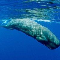 Những loài vật có tiếng kêu lớn nhất thế giới