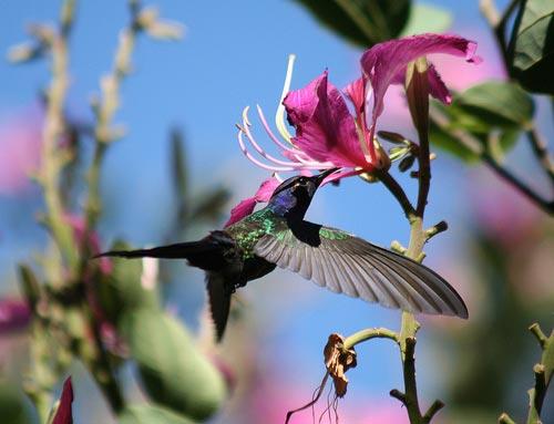 Những phát hiện mới về các loài chim