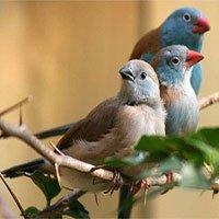 Những phương thức giao tiếp đặc biệt của các loài động vật