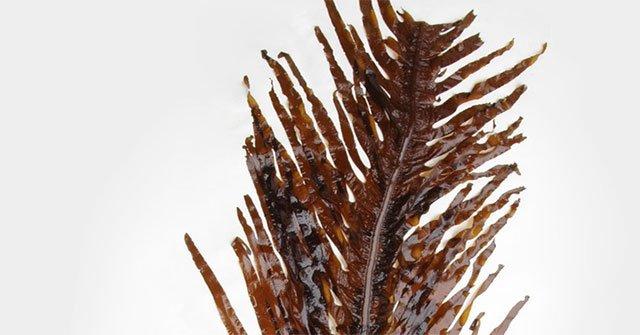 Những tác dụng ít biết của tảo nâu mekabu