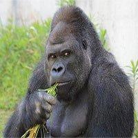 Những thông tin về loài động vật có bộ gene giống người đến hơn 98%