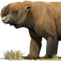 Những thú khổng lồ từng thống lĩnh Australia thời tiền sử