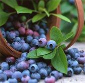 Những trái cây giảm nguy cơ tiểu đường tuýp 2