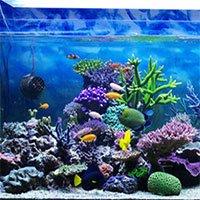 Những yếu tố khiến san hô trong bể cá thay đổi màu sắc