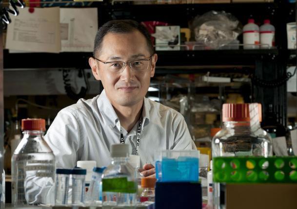 Nobel Y học 2012