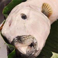 Nọc độc của cá mặt thỏ nguy hiểm thế nào?