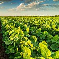 Nông nghiệp thời AI: Cuộc cách mạng hướng đến mục tiêu bền vững
