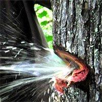 Nước bắn tung toé từ thân cây như vòi mở van tại Ấn Độ gây sốt mạng xã hội