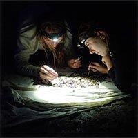 Ô nhiễm ánh sáng làm giảm số lượng côn trùng