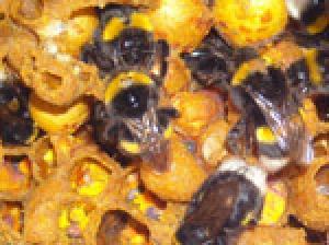 Ong phản ứng tùy theo hoàn cảnh