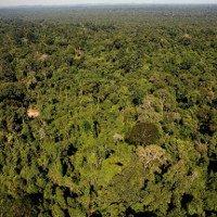 Peru cảnh báo rừng nhiệt đới Amazon bị tàn phá với tốc độ nhanh