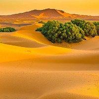 Phải chăng chính con người đã biến Sahara thành sa mạc?