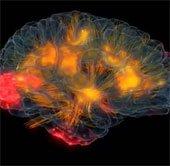 Phần mềm thực tế ảo phơi bày hoạt động của não bộ