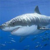 Phao cứu hộ thông minh cảnh báo cá mập tấn công