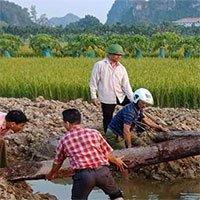 Phát hiện 2 cọc gỗ cổ bên sông Bạch Đằng
