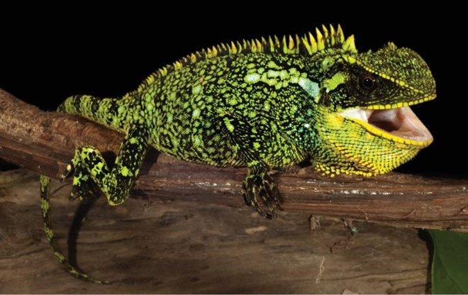 Phát hiện ba loài thằn lằn mới chưa từng được biết đến