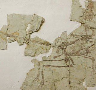 Phát hiện bộ xương của chim trong bụng khủng long