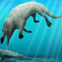 Phát hiện cá voi bốn chân kỳ dị 43 triệu năm tuổi