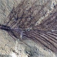 Phát hiện cách khủng long tồn tại với sự khắc nghiệt ở siêu lục địa Gondwana cổ đại