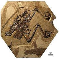 Phát hiện chim hóa thạch đầu tiên với quả trứng còn nguyên vẹn