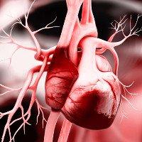 Phát hiện cơ chế hình thành tim ở phôi thai