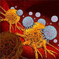 Phát hiện cơ chế miễn dịch