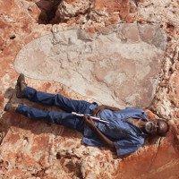 Phát hiện dấu chân khủng long lớn nhất thế giới ở Australia