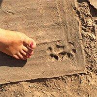 Phát hiện dấu chân và hình vẽ động vật 1.500 năm tuổi