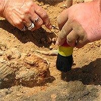Phát hiện di cốt người cổ niên đại 1,8 triệu năm ở Indonesia