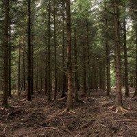 Phát hiện giống cây cao nhất thế giới trên đảo Borneo