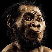 Phát hiện họ hàng mới của loài người ở Nam Phi