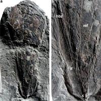 Phát hiện hóa thạch 30 triệu năm của mực ma cà rồng