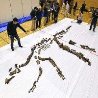 Phát hiện hóa thạch bộ xương khủng long hoàn thiện lớn nhất