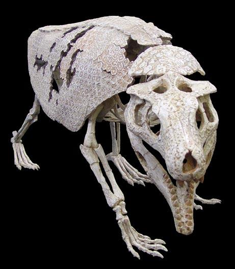 Phát hiện hóa thạch cá sấu có hình dáng giống loài tatu ở Braxin