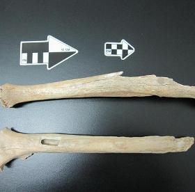 Phát hiện hóa thạch cá thể người hiện đại cổ 40.000 năm tuổi