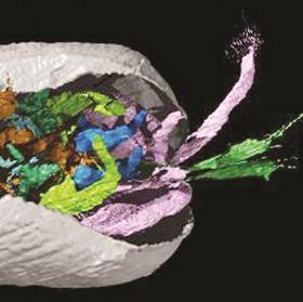 Phát hiện hóa thạch có mô mềm cực hiếm