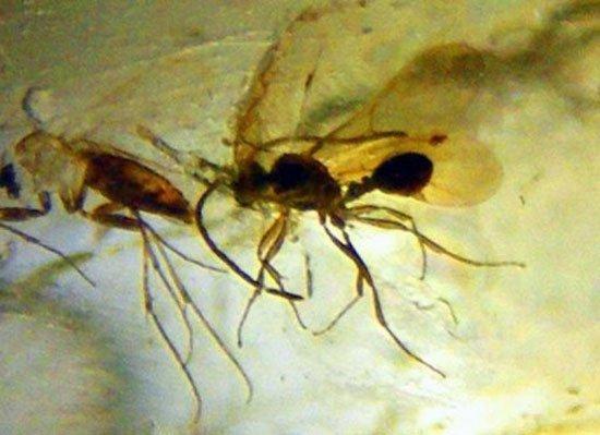Phát hiện hóa thạch côn trùng 23 triệu năm tuổi