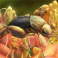 Phát hiện hóa thạch côn trùng thụ phấn sớm nhất