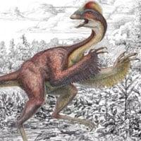 Phát hiện hóa thạch