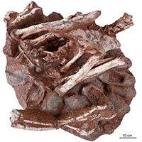 Phát hiện hóa thạch khủng long 70 triệu năm cùng trứng còn nguyên phôi