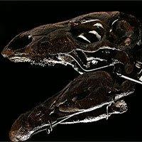Phát hiện hoá thạch loài khủng long vây kiếm lâu đời nhất thế giới