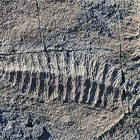Phát hiện hóa thạch loài thú răng chạm có niên đại 16.000 năm tại Uruguay