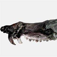 Phát hiện hóa thạch lớp thú giống loài sóc trong